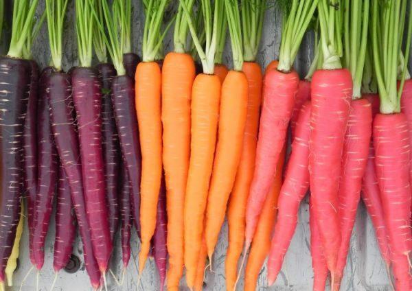 Морковь - довольно капризный корнеплод