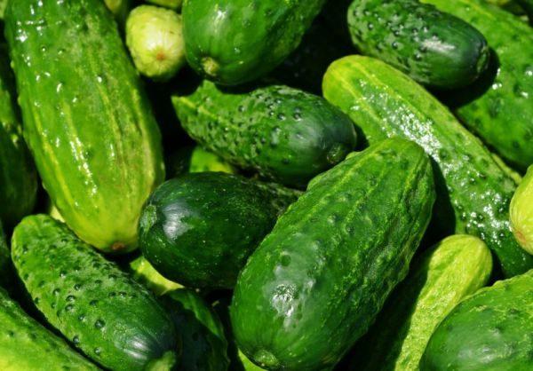 Выращенные на частном подворье огурчики складывают в овощном отсеке холодильника
