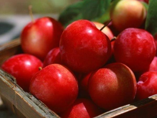Без дополнительной обработки плоды пролежат в сохранности до 2-х месяцев