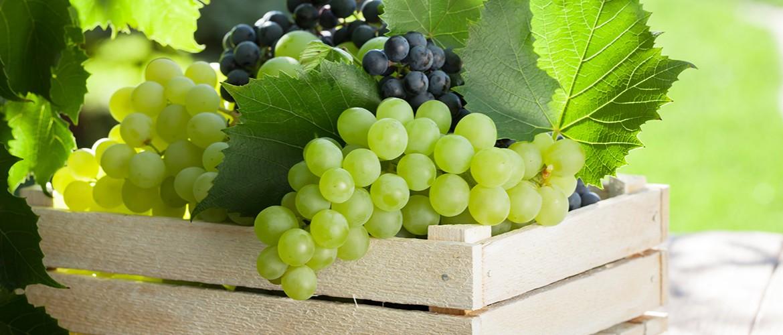 Как сохранить виноград молдова на зиму