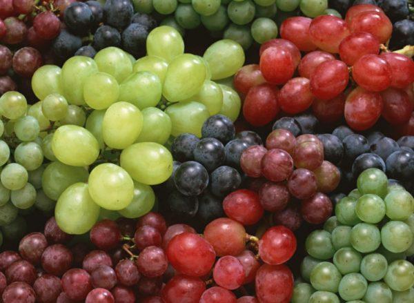 Лучшей лежкостью обладают виноградные грозди с упругими созревшими ягодами