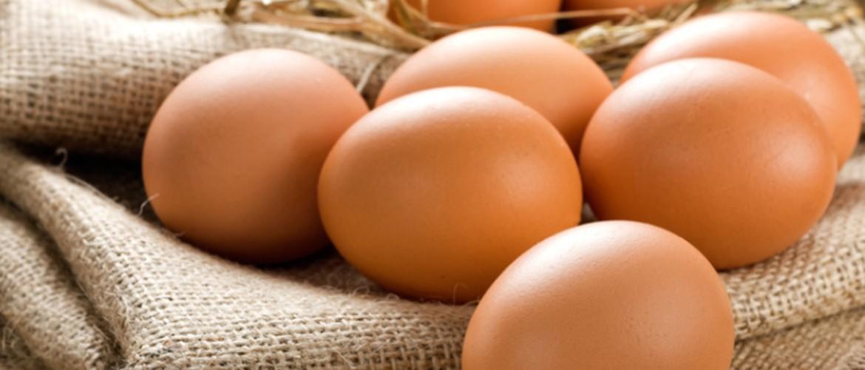 Столовое яйцо срок хранения