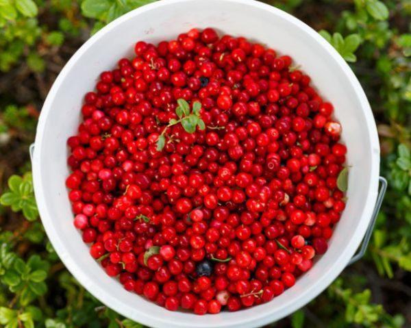 Пользуясь сеткой, легко промывать ягоды от песка, земли, пыли