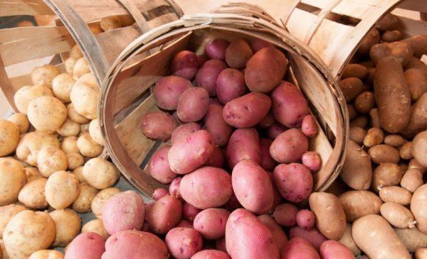 Неправильный подход, нарушающий принципы хранения, ведет к потере части урожая