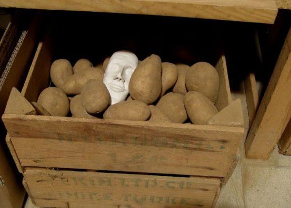 Картофель хранят в больших объемах, поэтому целесообразно выбирать ящики