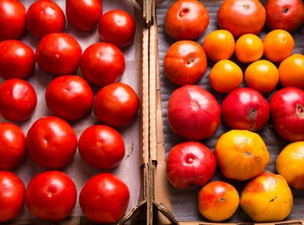 Для дозревания пригодны помидоры разной степени зрелости без наличия повреждений