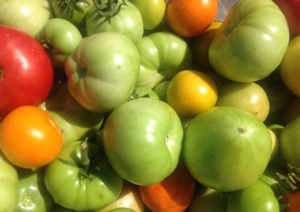 Регуляция температуры в хранилище позволит ускорить или замедлить дозревание овощей
