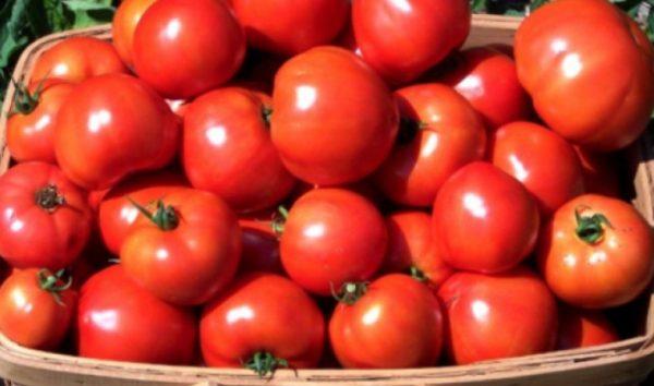 Низкая температура и постоянное обветривание не способствуют длительному хранению плодов в холодильнике