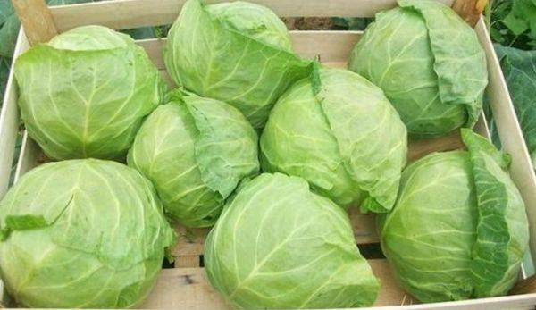 Такой способ хранения предусматривает зимовку овощей в сухих ящиках либо коробках
