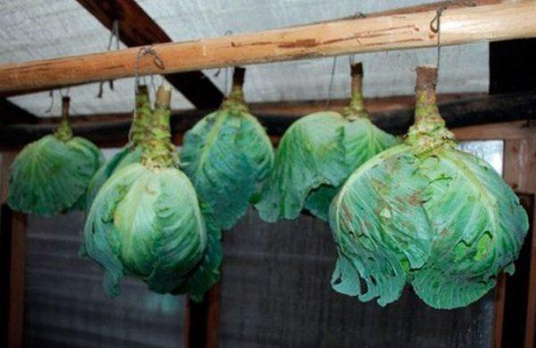 В подвале или погребе готовые овощи следует правильно уложить