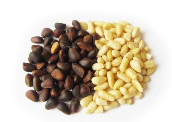 Приобретая семена кедра, требуется выбирать их правильно