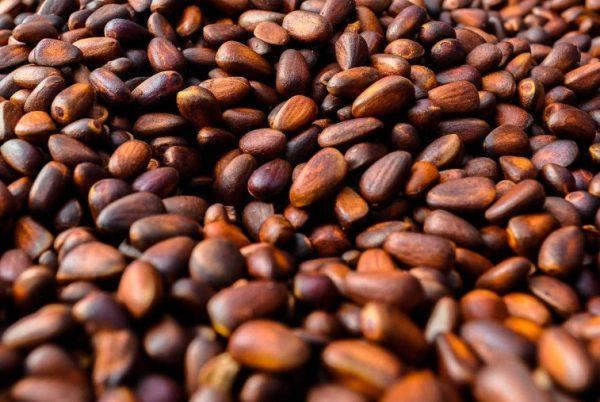 Сохранить кедровые семена удастся несколькими способами, включая сушку и заморозку