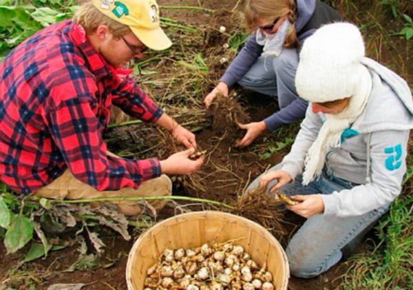 Осенью не нужно спешить с уборкой урожая