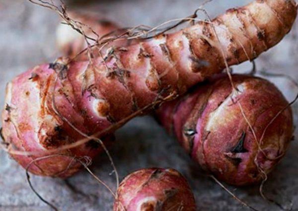 Плоды топинамбура являются корнеплодами, технология их хранения отличается от того, как хранят картофель