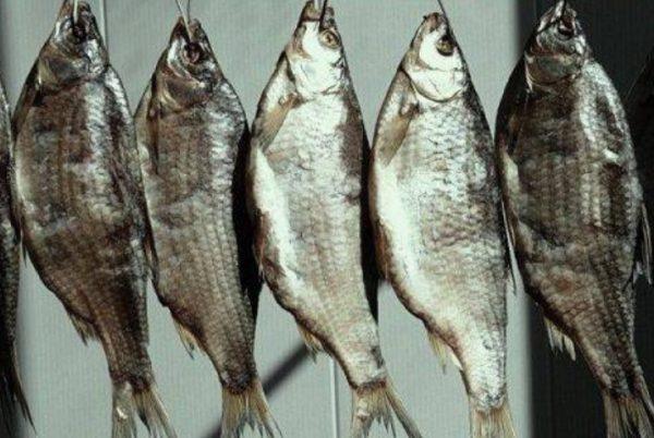 Хранение в подвешенном состоянии представляет собой наиболее популярный вариант сохранения рыбы