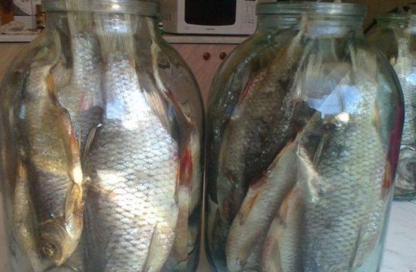 Хранение вяленой рыбы в стеклянной таре