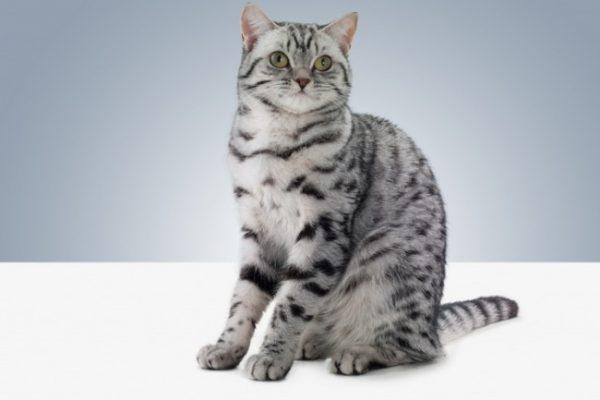 От оставшихся на полу и коврах кошачьих меток исходит неприятный запах, который ощущается при входе в квартиру