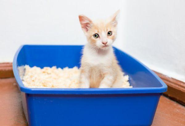 В каждом доме найдется ряд подручных средств, с помощью которых можно быстро убрать кошачьи лужи и избавиться от запаха