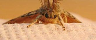 Маленькие белые насекомые в квартире и ванной – фото, описание, как избавиться