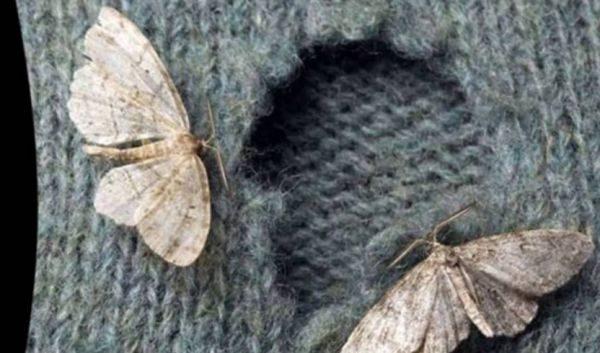 Обработку следует повторять с периодичностью в 1 неделю, пока все насекомые в помещении не будут уничтожены.