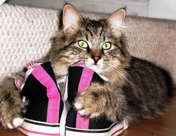 Важно быстро среагировать и знать, как избавиться от запаха кошачьей мочи в обуви