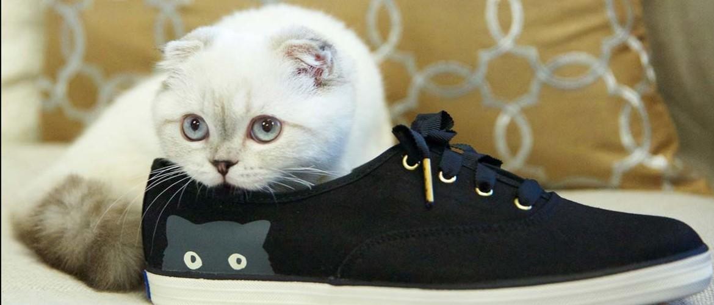 Как вывести запах кошачьей мочи из обуви: домашние средства