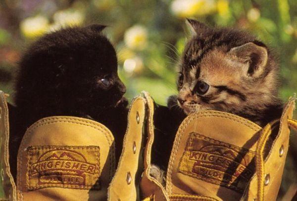 Сначала обувь нужно обработать одним из средств (домашним, специальным)