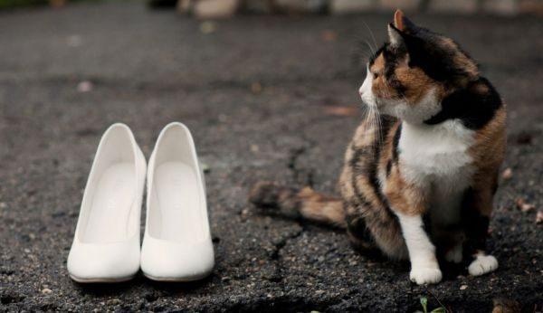 Кошачья моча имеет особый въедливый состав