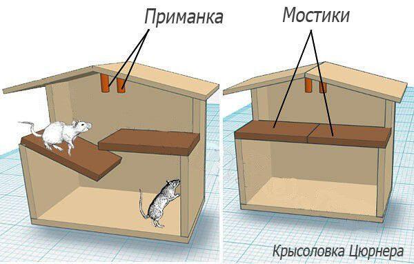 Как сделать крысоловку своими руками
