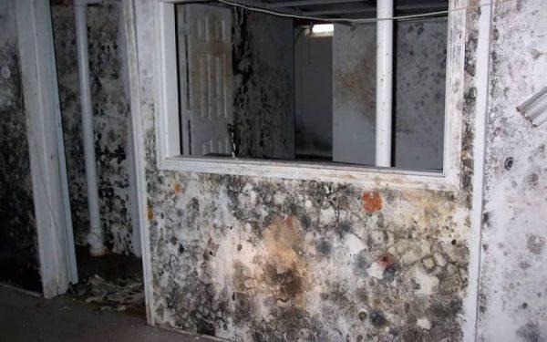 Устранение запаха сырости и плесени в жилом помещении