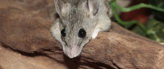 Как вывести мышей из частного дома быстро и эффективно