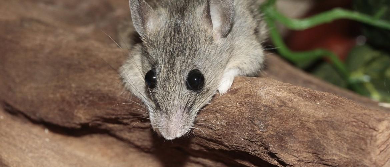 Как поймать мышь в квартире гуманным способом